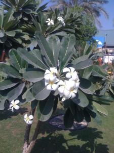 Pflanze in Abu Dhabi