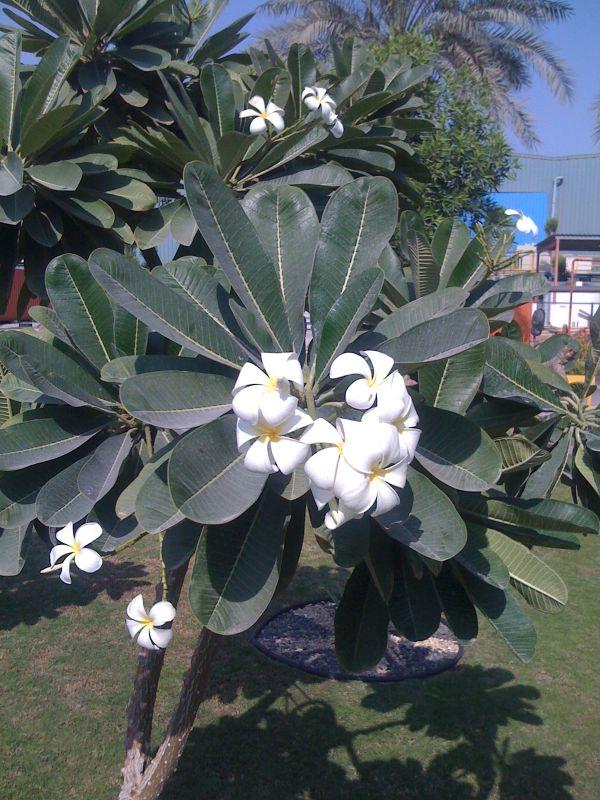 Eine Pflanze in Abu Dhabi