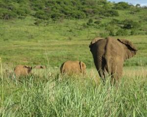Elefantenkuh mit Kindern